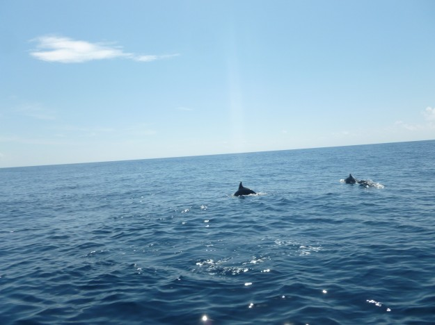 dolphins off Isla Mujeres