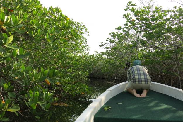 Xcalak Fishing mangrove