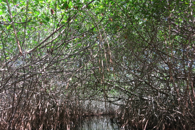 Xcalak Mangrove Tunnel