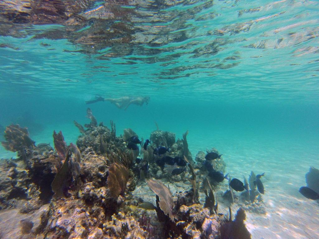 Xcalak Snorkeling