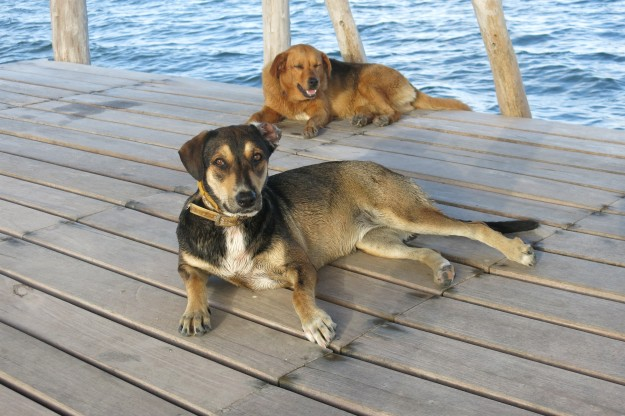 Pet Sitting for Sasha and Sadie