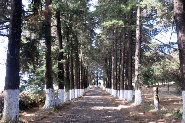 Road to El Estribo