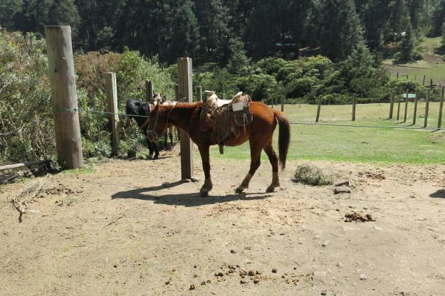 Sierra Chincua Horse