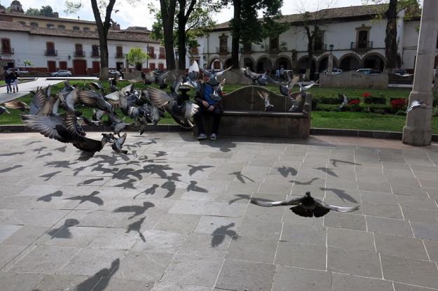 Pigeons in Plaza Grande