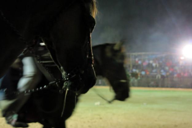 Horses in Baca, Yucatan