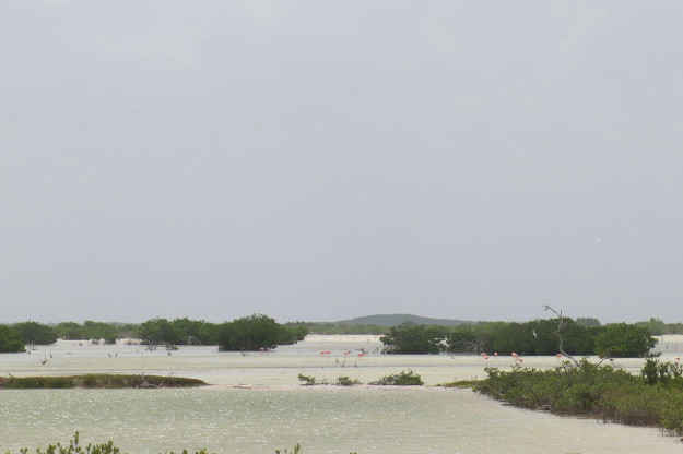 Telchac Puerto Flamingos
