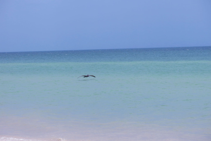 Telchac Puerto Pelican