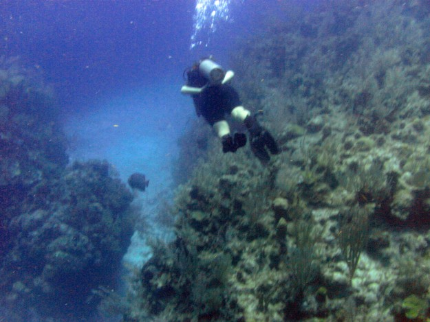 deidre diving in mahahual