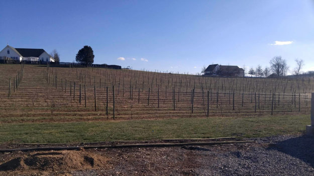 Virginia Wine Country