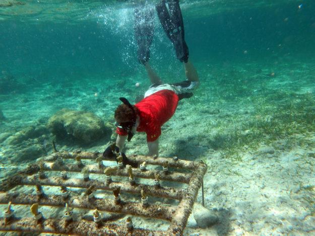 Jason harvesting coral