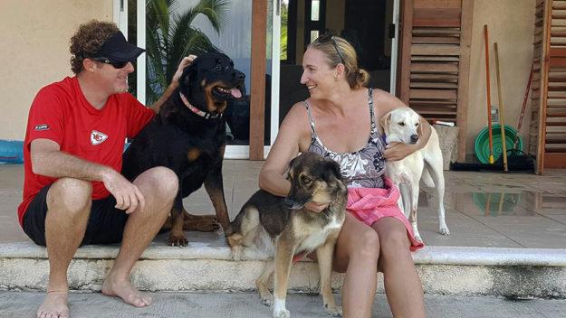Mahahual dogs