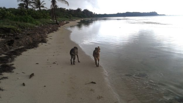 Xcalak Beach Dogs